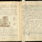 Kriegstagebuch von Hans-Joachim Röhr aus Görlitz - Band 1, item 19