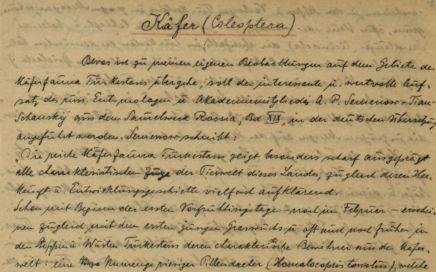 Goto Kleiber Manuskript 06 - Käfer und Schmetterlinge, item 1