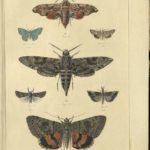 Kleiber Manuskript Bilder 02 - Insekten und Spinnen, item 6