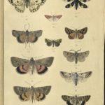 Kleiber Manuskript Bilder 02 - Insekten und Spinnen, item 9