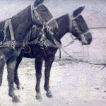 Φωτογραφίες του Χρύσανθου Χριστοδούλου (Macedonian Mule Corps - MMC)