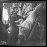 Kriegsfotos Walter Naumann - Negativalbum Nr. 4, Fotos Nr. 301-400