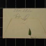 Feldpost vom Oberleutnant Hugo Protivensky an seine Frau, item 29